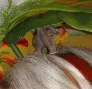 ... a hidden elephant.